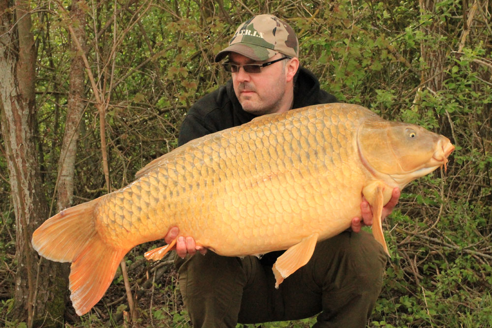 A Recent 50.04 Common